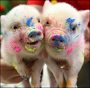pig-art